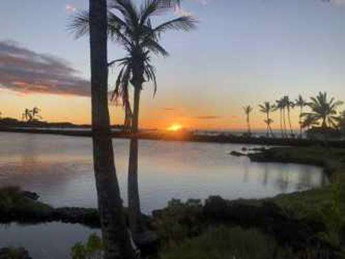 Sunset with palm trees and bay