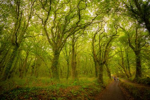 Photo of forest with green trees