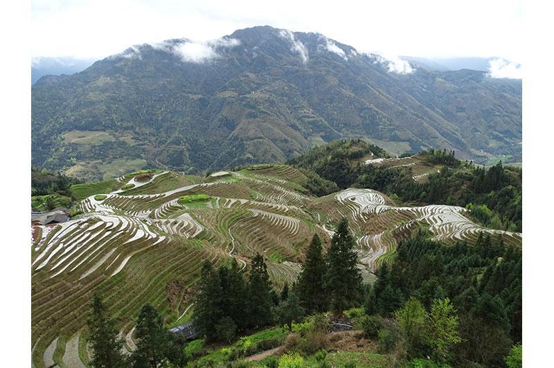 Photo of Longi Terraced Rice Fields, China