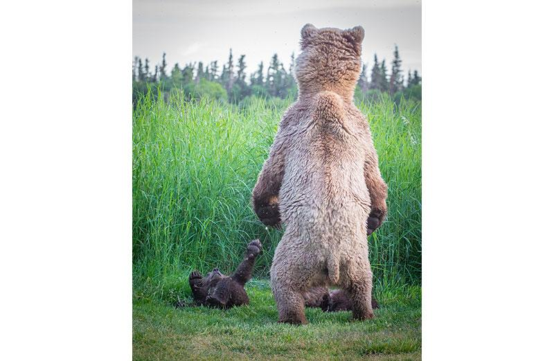 Photo of bear with cub