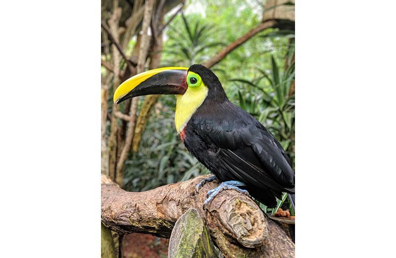Photo of bird on tree limb.